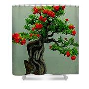Red Berried Bonsai Shower Curtain