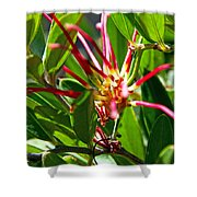Red Spider Flower Close Up Shower Curtain