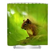 Red Squirrel  Shower Curtain