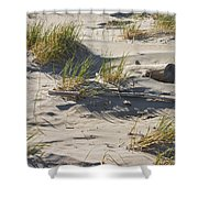 Sand And Driftwood Popham Beach Maine Shower Curtain