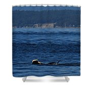 Southern Resident Orcas And Salmon Off The San Juan Islands Playing With Salmon Shower Curtain