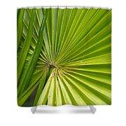 Spiny Fiber Palm Shower Curtain