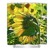 Sunflower 7249a Shower Curtain