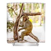 Swinging Monkey Shower Curtain
