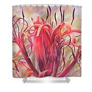 Tendrils Gymea Lily   Shower Curtain