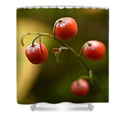 The Berries Of The Lily Of The Valley Shower Curtain