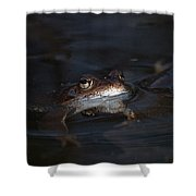 The Common Frog 1 Shower Curtain