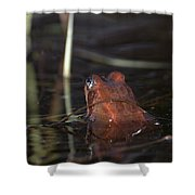 The Common Frog 2 Shower Curtain