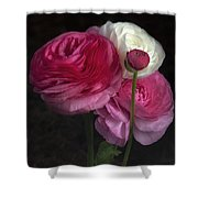 Three And A Half Blooms Shower Curtain