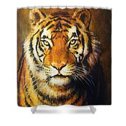 Tiger Head, Color Oil Painting On Canvas. Shower Curtain