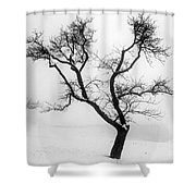 Tree In The Snow Shower Curtain