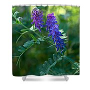 Tufted Vetch Shower Curtain
