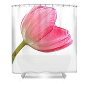 Tulip Acropolis Shower Curtain