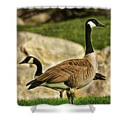 Two Geese Shower Curtain