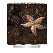 Vanishing Star Shower Curtain