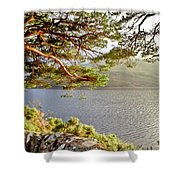 Warmth  Of The Pine Branch. Shower Curtain