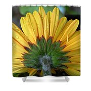 Water Drops On Gerbera Daisy Shower Curtain