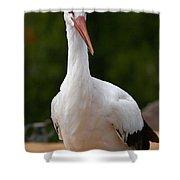White Stork 4 Shower Curtain