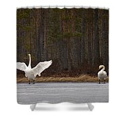 Whooper Swans 2 Shower Curtain