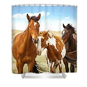 Wild Herd Of Mustang Horses Shower Curtain