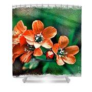 Wildflowers 5 -  Polemonium Reptans  - Digital Paint 3 Shower Curtain
