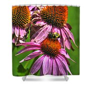 01 Bee And Echinacea Shower Curtain