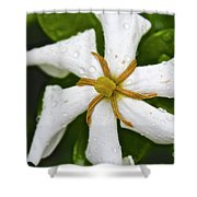 01142017067 Shower Curtain