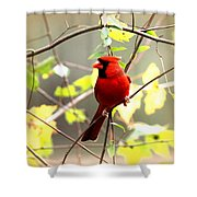 0138 - Cardinal Shower Curtain