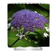 0149 Shower Curtain