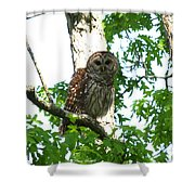 0298-001 - Barred Owl Shower Curtain