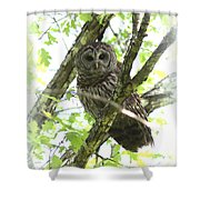 0304-002 - Barred Owl Shower Curtain