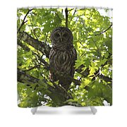 0313-010 - Barred Owl Shower Curtain