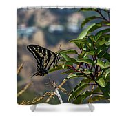 0518- Butterfly Shower Curtain