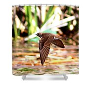 0518 - Northern Rough-winged Swallow Shower Curtain