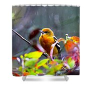 0651 - Baltimore Oriole Shower Curtain