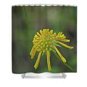 081117008 Shower Curtain