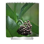 081117010 Shower Curtain