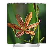 081117011 Shower Curtain