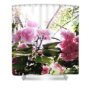 09032015060 Shower Curtain