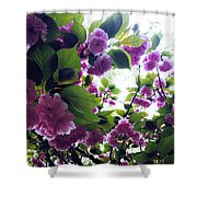 09032015066 Shower Curtain