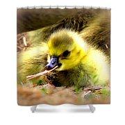 0983 - Canada Goose Shower Curtain