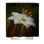 Arctic Starflower Shower Curtain