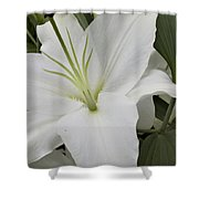 ,, Flowers ,, Shower Curtain