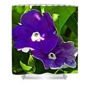 Purple Flowers In Pilgrim Place In Claremont-california Shower Curtain