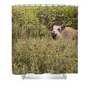Wild Boar Sus Scrofa Shower Curtain