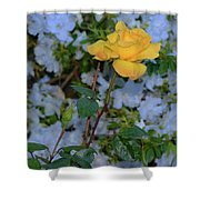 0139 Shower Curtain