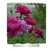 0195 Shower Curtain