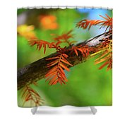 1280 Shower Curtain