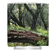 1b6338 Oak Forest On Sonoma Mountain Ca Shower Curtain