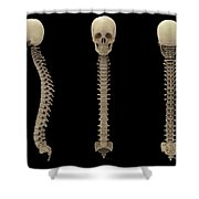 3d Rendering Of Human Vertebral Column Shower Curtain